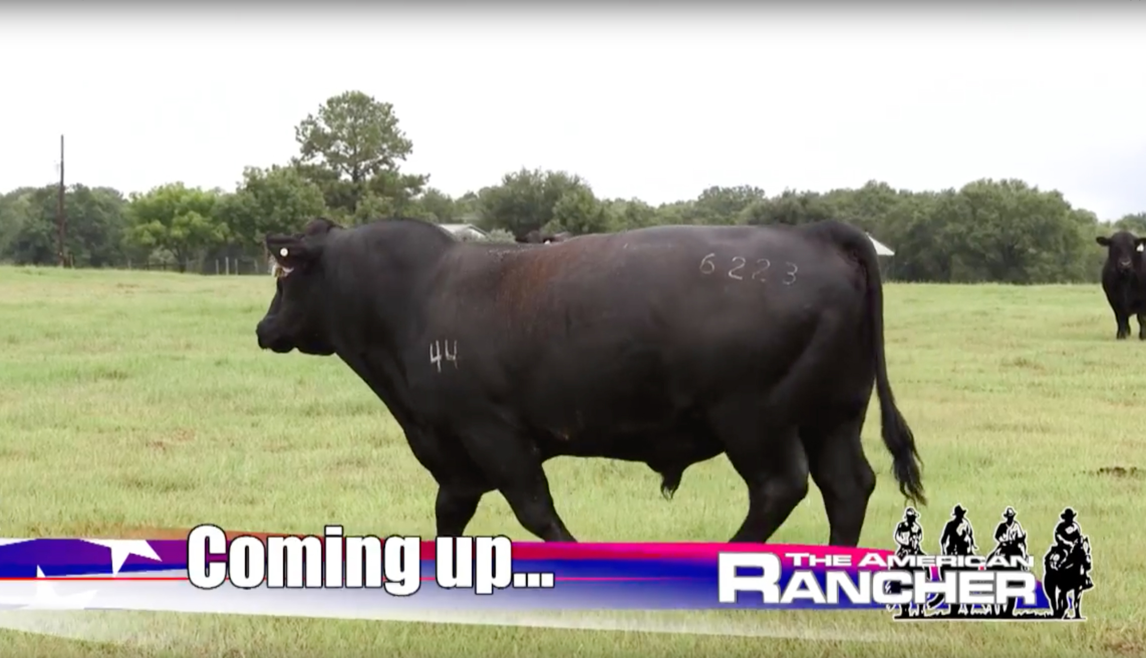 The American Rancher 2018 - Walmart Branded Beef Program