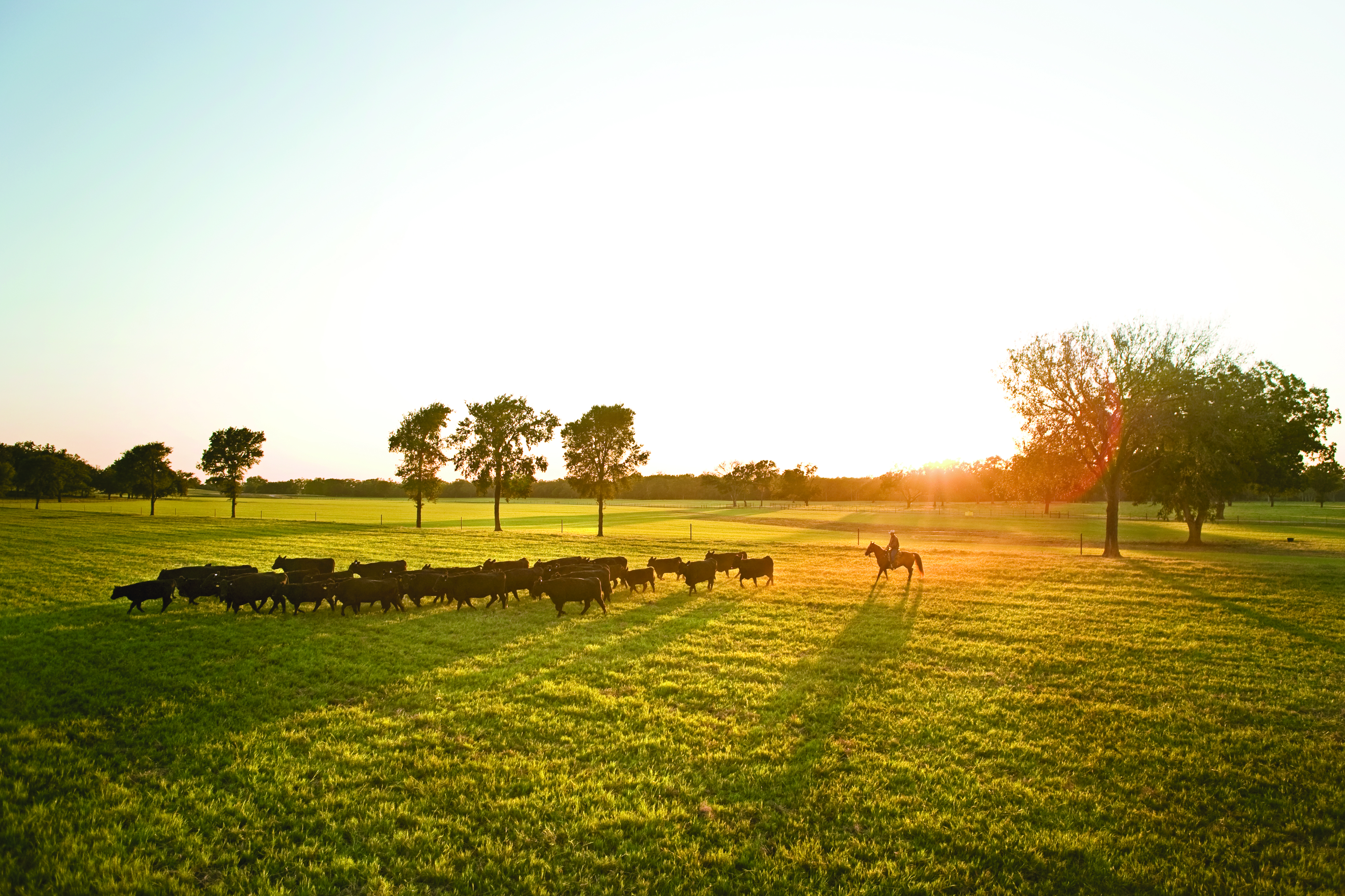 The American Rancher features 44 Farms