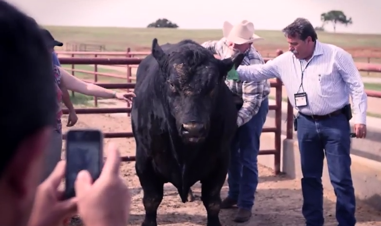 Five Nations Beef Alliance Tour